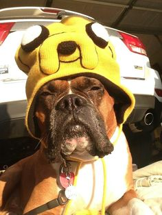 Adventure Time hat, i need this for my dog!