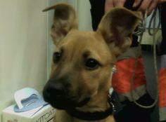 Rude Martinez Lo oigo todo!!! #veterinario www.veterinario.es