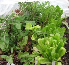Cool Season Vegetables Today we are talking about vegetables that like to be harvested in the cooler seasons of fall or winter.  Here is the list:  Artichokes, Arugula, Fava Beans, Beets, Bok Choy, Broccoli, Brussels Sprouts, Cabbage, Carrots . . .