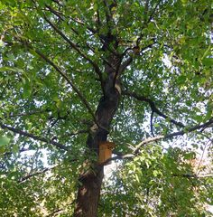 """Musée du Louvre's Verified account:   @MuseeLouvre: Apr 28, 2018: """"#DidYouKnow ? About fifty birdhouses were made and installed by the #Tuileries gardeners. Bats, robins and chickadees are invited there to fight against pests: chestnuts leafminers, boxwood moths and aphids... #NatureMW #MuseumWeek"""" https://twitter.com/MuseeLouvre/status/990176321476157440"""