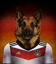 faf6761c0 World Cup Brazil 2014 · GERMANY.German Shepherd wearing a German soccer  jersey with the colors of the flag in