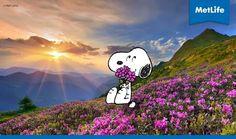 Metlife Metlife Snoopy, Peppermint Patties, Peanuts Snoopy, Little Red, Woodstock, Kite, Beagle, Charlie Brown, Cartoon Characters