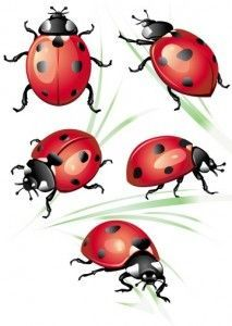 lady bug tattoos - Google Search