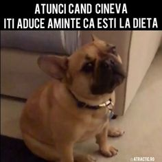 ☆ATRACTIC (@atractic) • Instagram photos and videos French Bulldog, Photo And Video, Videos, Fitness, Dogs, Photos, Animals, Instagram, Diets