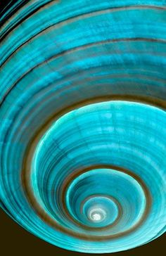 Giant helmut tun shell closeup by Henry Dome - Fibonacci spirals in nature Bleu Turquoise, Shades Of Turquoise, Shades Of Blue, Teal, Turquoise Cottage, Motifs Organiques, Spirals In Nature, Patterns In Nature, Fractal Art
