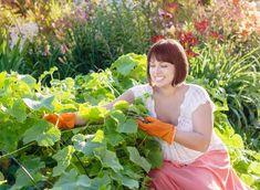 Soluții pentru o recoltă bogată de castraveți - Fasingur Organic Mulch, Organic Fertilizer, Summer Picnic, Summer Garden, Garden Soil, Garden Beds, Buy Seeds, Long Cut, How To Get Warm