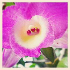 Orquídeas no Jardim de casa