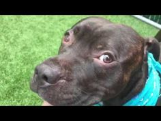 BEETHOVEN – A1118625