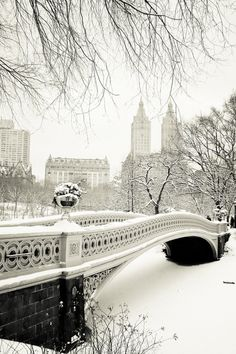 Snowy City landscape - from Have a holly jolly Christmas!