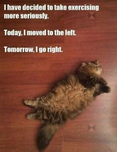 I have decided to take exercising more seriously. #catoftheday