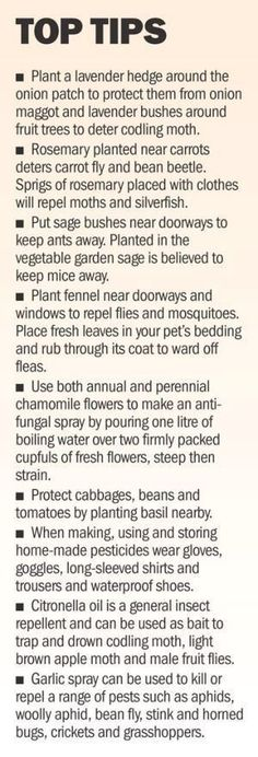 Organic gardening tip. Do you enjoy designing your very own natural and organic vegetable backyard? Here are several earth-friendly gardening tips designed to help you in the right direction. #organicvegetablegardening