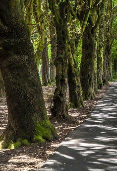 St. Anne's Park - Dublin (Ireland) - [ http://photography.osx128.com/st-annes-park-dublin-ireland-2/ ] #ParksAndGardens