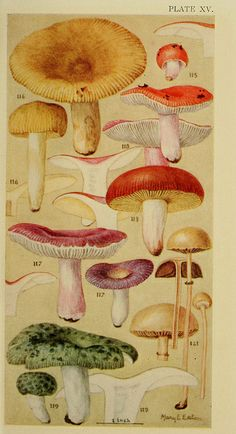Field book of common gilled mushrooms : - Biodiversity Heritage Library Botanical Drawings, Botanical Prints, Mushroom Art, Ecole Art, Fauna, Natural History, Vintage Prints, Art Inspo, Illustration Art