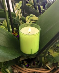 Refill für Q-Lights & Barrilito - lime Tea Lights, Candle Holders, Lime, Candles, Lima, Tea Light Candles, Porta Velas, Limes, Candy