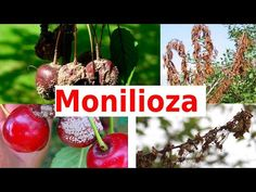 Garden Trees, Fruit Trees, Grape Vines, The Creator, Christmas Ornaments, Holiday Decor, Youtube, Avocado, Gardening