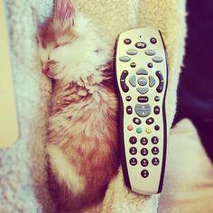The #kittensofinstagram kitten of the day is @17twelve 😻❤ #cute #adorable #sweet #kitten #little #baby #cat #instafollow #dogs #pets #cute