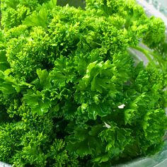 Parsley -   For thousands of years, parsley has been used as a medicinal herb to settle the stomach and aid digestion.