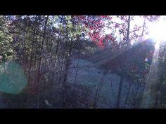 Deer hunt turns into a BOBCAT hunt! www.365downandout.com