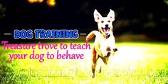 Treasure trove to teach your dog to behave - Dog Training Tips - Everything About Dog Training Basic Dog Training, Dog Training Videos, Dog Training Tips, Puppies, Teaching, Pets, Animals, Cubs, Animales