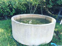 Concrete Pool, Coastal Farmhouse, Back Patio, Pool Designs, Garden Styles, Vintage Posters, Garden Ideas, Planter Pots, Projects To Try