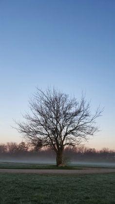 Morning fog by: Sarah Bornhorst-Hargrave