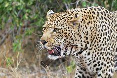 Safari en Afrique australe : sur les traces des Big 5 - Blog Ekima Panther, Blog, Animais, African Buffalo, White Rhinoceros, Savannah, Wild Animals, Blogging