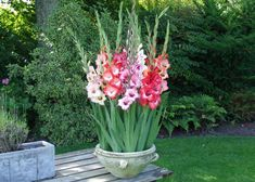 Different Perennial Gladiolus Flower Seeds 50 Seeds RARE Sword Lily . Flower Planters, Garden Planters, Flower Pots, Full Sun Container Plants, Container Gardening, Growing Flowers, Planting Flowers, Gladiolus Flower, Balcony Plants