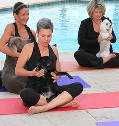 Yoga with your dog? Whether you're 'for it' or not, it makes us smile!