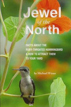 How to attract Hummingbirds in Canada