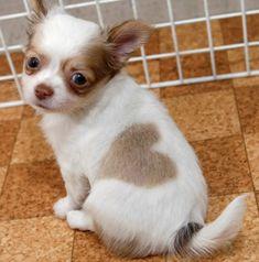 Dit Zijn Een Aantal Honden Die Door Moeder Natuur In Een Kunstwerk Zijn Getransformeerd!