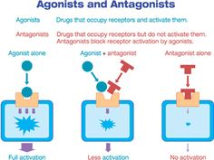 agonists and antagonists - Yahoo Image Search Results