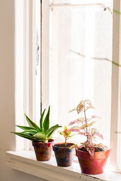 Easy Spring DIY Projects