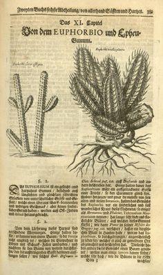 1704 - Museum museorum, valentini natur und materialien  by Johann David Zunner -
