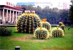 Cactus_Plant_art_garden_sculpture_634658878184261833_1.jpg 660×452 pixels