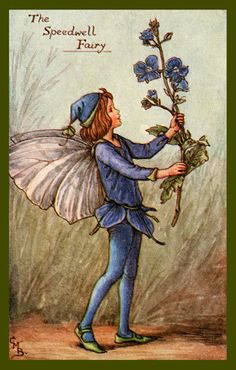 The Speedwell Fairy by Cicely Mary Barker from the 1920s. Quilt Block of vintage fairy image printed on cotton. Ready to sew.  Single 4x6 block $4.95. Set of 4 blocks with pattern $17.95.