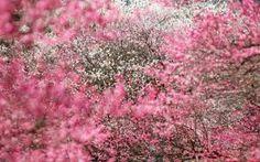 Resultado de imagen para lluvia y flores
