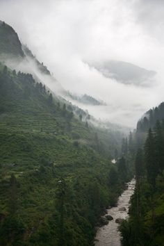 Woodland Valley | nature | natures beauty | river | pine trees | mountains | valley | mist | winter |