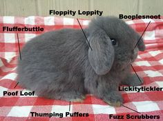 The Anatomy of a Fluffy Bunny. I think they've covered everything. This looks just like Lulu when she was a baby:)