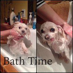 This is my maltese taking her bath! She didn't like it! Ha!