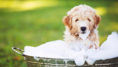 9 Tips on How to Prevent Shedding in Dogs - Top Dog Tips