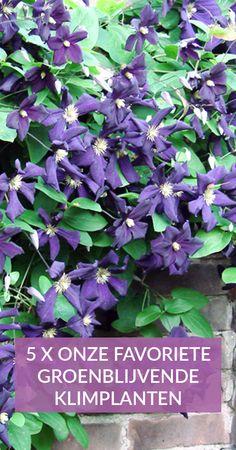 Flora Garden, Garden Plants, Clematis Armandii, Outside Plants, Creative Landscape, Italian Garden, Rooftop Garden, Growing Flowers, Painting Tips
