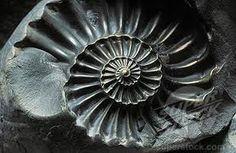 fossilized spiral