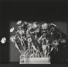 A print by infamous photographer Robert Mapplethorpe Just Kids, Robert Mapplethorpe, Tulips, Modern Art, New Baby Products, Flora, Black And White, Prints, Flower Photography