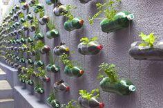 // urban vertical garden built from hundreds of recycled soda bottles
