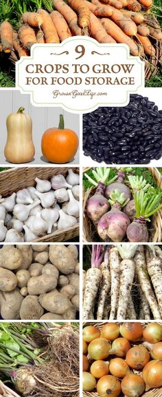 you have a root cellar or cool basement consider experimenting with growing some of these crops for winter food storage.If you have a root cellar or cool basement consider experimenting with growing some of these crops for winter food storage. Winter Vegetables, Growing Vegetables, Growing Tomatoes, Food Storage, Storage Ideas, Diy Storage, Storage Containers, Storage Bins, Organic Gardening