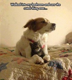 """I actually think she saved the kitty. The dog was saying """"be cool"""" just like your older brother did when u were kids!"""