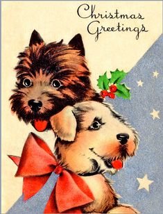 Cute Christmas terriers out to give scotties a run for their money...
