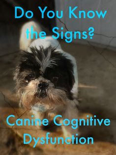It's not just old age…signs of Canine Cognitive Dysfunction