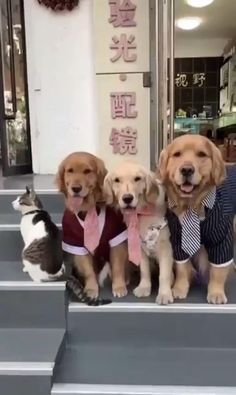 - Relatives photos can be really hard – fascinating baby animals cute , stuff , animals silly , cute animals , animals Funny Dog Videos, Funny Animal Memes, Cute Funny Animals, Cute Baby Animals, Funny Dogs, Cute Cats, Funny Memes, Cute Animal Videos, Cute Animal Pictures