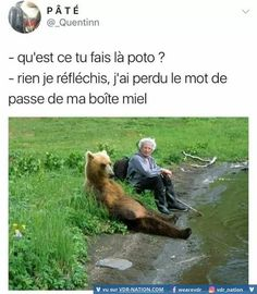 Memes Hilarious Cant Stop Laughing English 38 Super Ideas Funny True Quotes, Funny Puns, Funny Laugh, Funny Humor, Bear Puns, Funny Tweets Twitter, Great Memes, Can't Stop Laughing, Man Humor